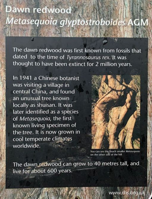 Information board on the Dawn Redwood Tree.