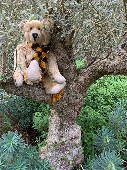 Bertie sat in the branches of an Olive tree.
