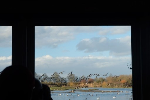 Looking out of the window of Swan Lake Hide, Slimbridge.