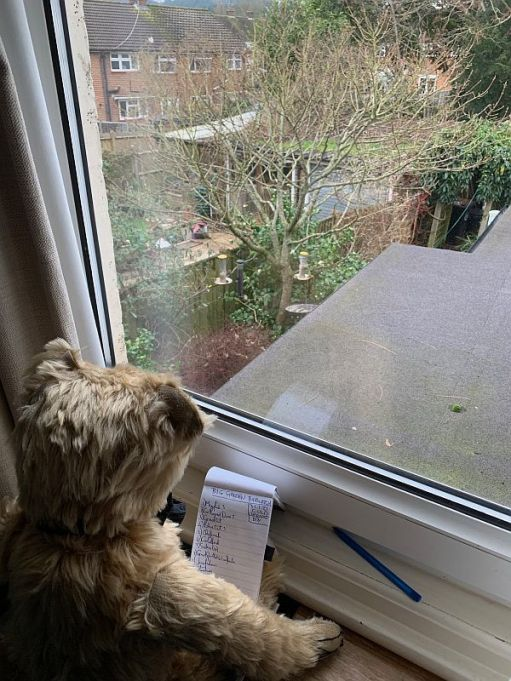 Bertie at the window of Laurel Cottage with his notepad full of the birds he's spotted during his Big Garden Birdwatch 2021.