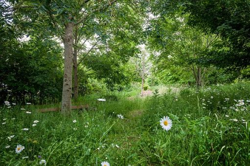 Trees, tall grasses, wild flowers and daisies in the wildlife garden.