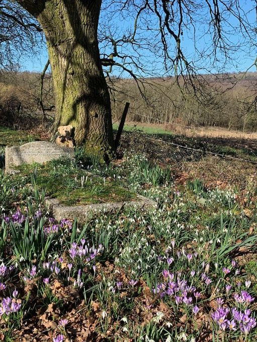 Snowdrops and Crocuses.