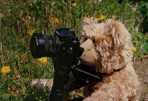 Bertie with Bobby's Minolta X700 camera.