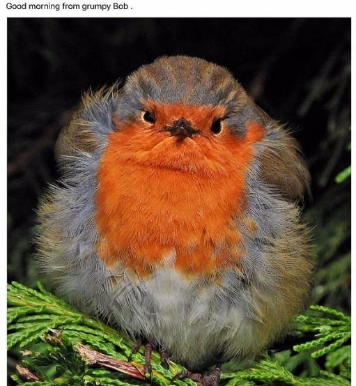 Good Morning from Grumpy Bob!