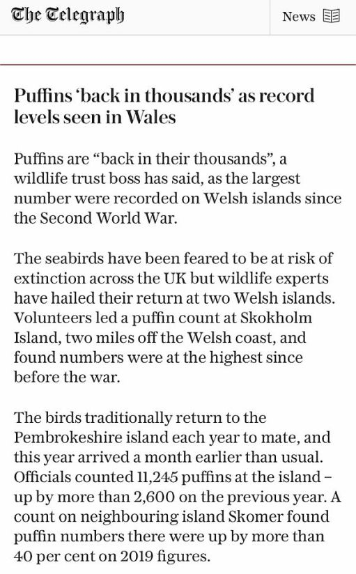 Puffins article in the Telegraph.