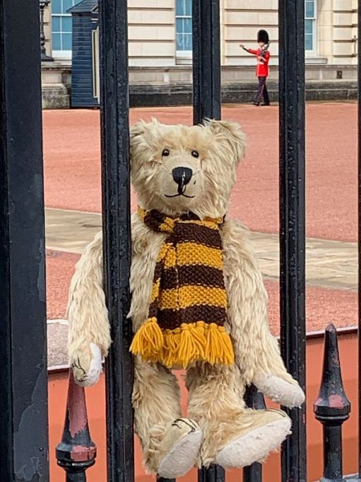 Close up of Bertie on the gate wondering if they are Changing the Guard.