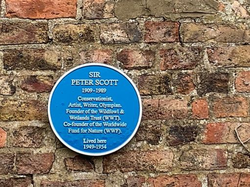 Blue Plaque commemorating Sir Peter Scott (1909-1989), who lived here 1949-1954.