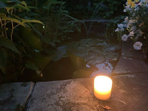 A candle lit for Diddley beside an ornamental fish pond.