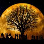 The Mindfulness Association community