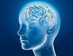 Mindfulness Meditation Regulates Alpha Rhythms