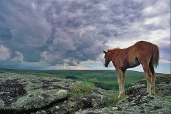 """Taming the """"Wild Horse"""" of the Mind"""