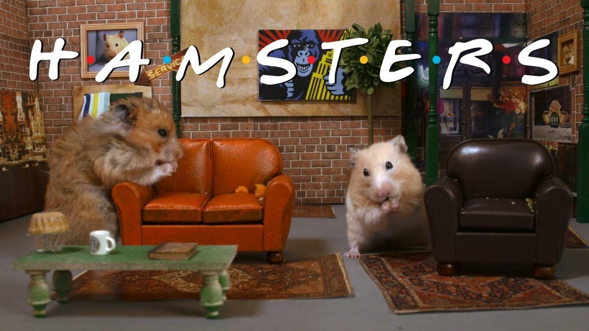 """Das Intro von """"Friends"""" mit Hamstern statt Menschen"""