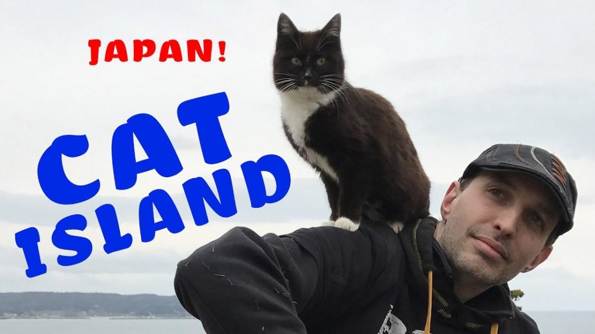 Zu Besuch auf Japans Katzeninsel Tashirojima