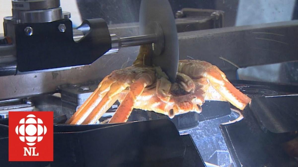Eine albtraumhafte Krabben-Zerlegemaschine