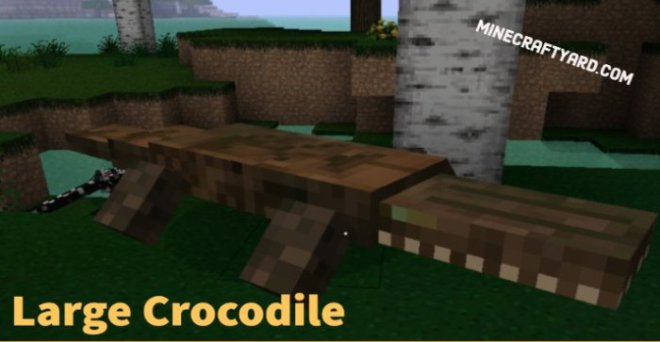 Large Crocodile