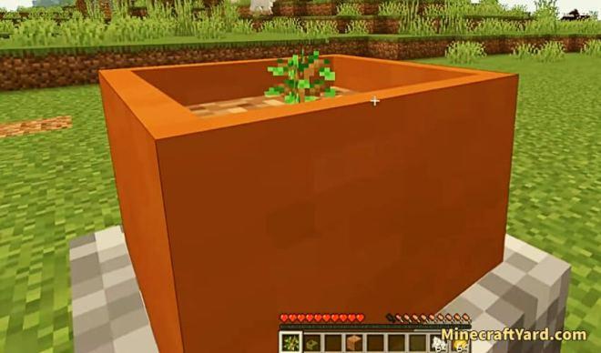 Botany Trees 3