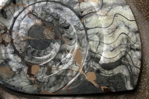 fosil Amonit