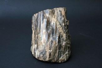 Fosilizirano drvo