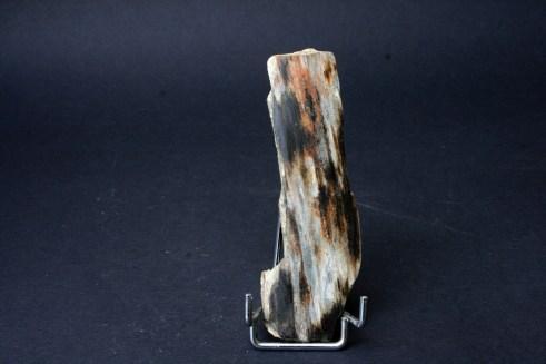 fosil Mamut