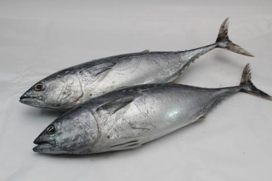 5 Jenis Ikan Patut Dielakkan Bagi Penderita Ekzema Gerd