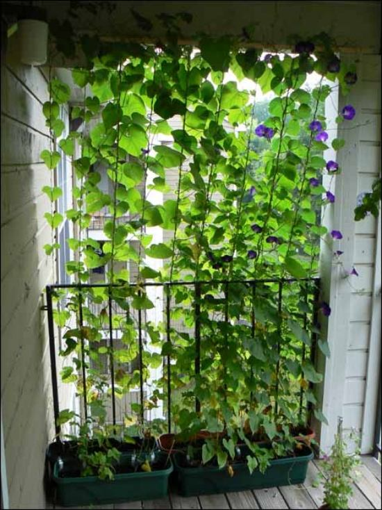 Vertical balcony gardens are inexpensive and effective screening