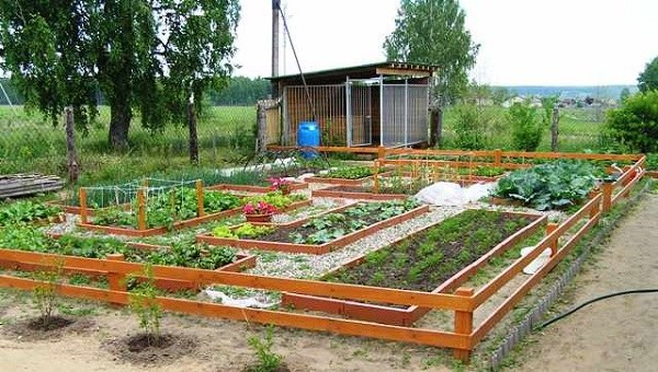 40 Vegetable Garden Design Ideas What You Need To Know?