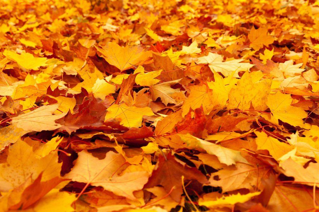 Gold stocks' autumn rally - part 6