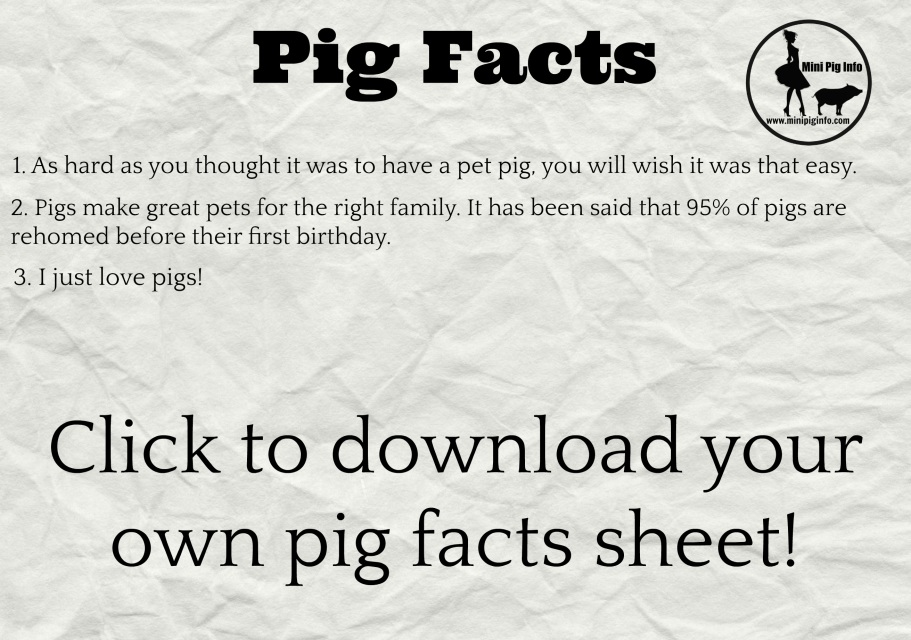 Mini Pig Fact Sheets
