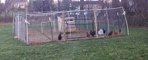 chickenrun 12-15