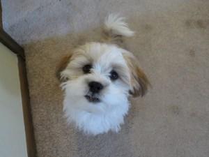 Buddy is a needy puppy