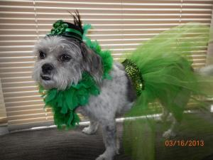 MeChew St Patty's Day Photo Contest Winner