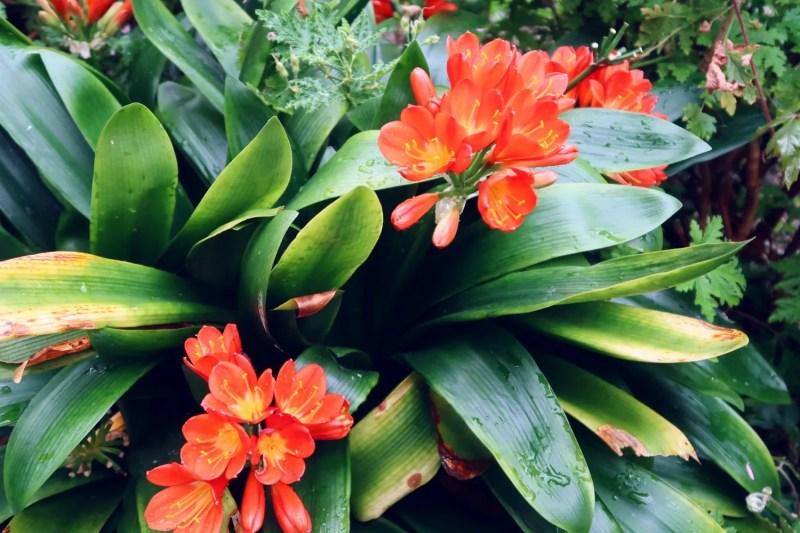 National Botanic Gardens Dublin @minkaguides bright flowers