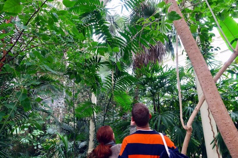 National Botanic Gardens Dublin @minkaguides palms