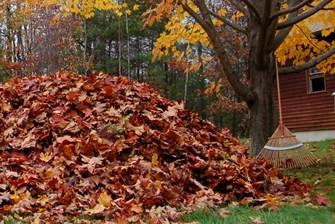 fall clean