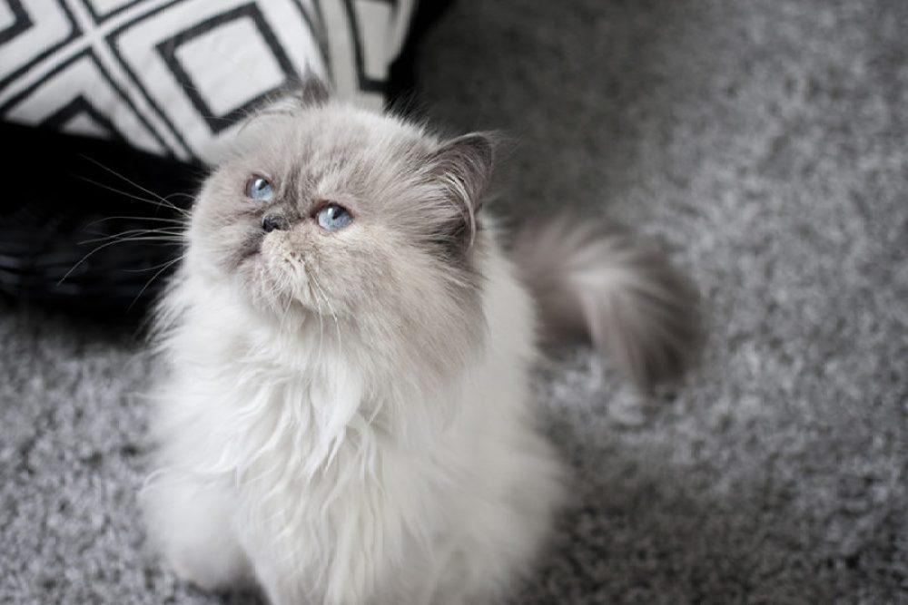 Tipps für Katzenfotografie vom Fotografen