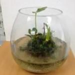 観葉植物とカラダの変化