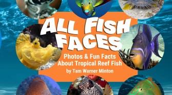AllFishFaces