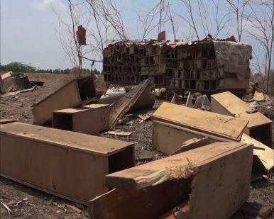 Yemen Saudi Arabia airstrike bee farm