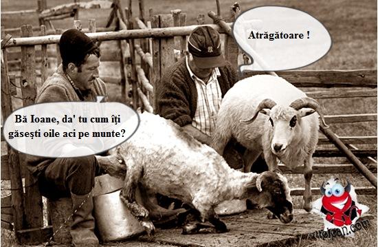 Banc cu ciobani
