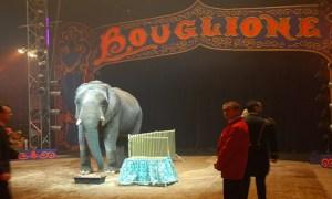 Le cirque Bouglione abandonne tous ses numéros avec animaux