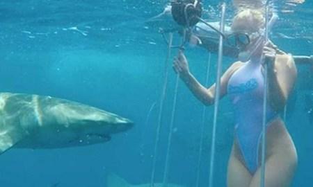 molly cavalli Floride attaque requin