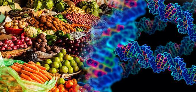 Resultado de imagen de pros transgenicos