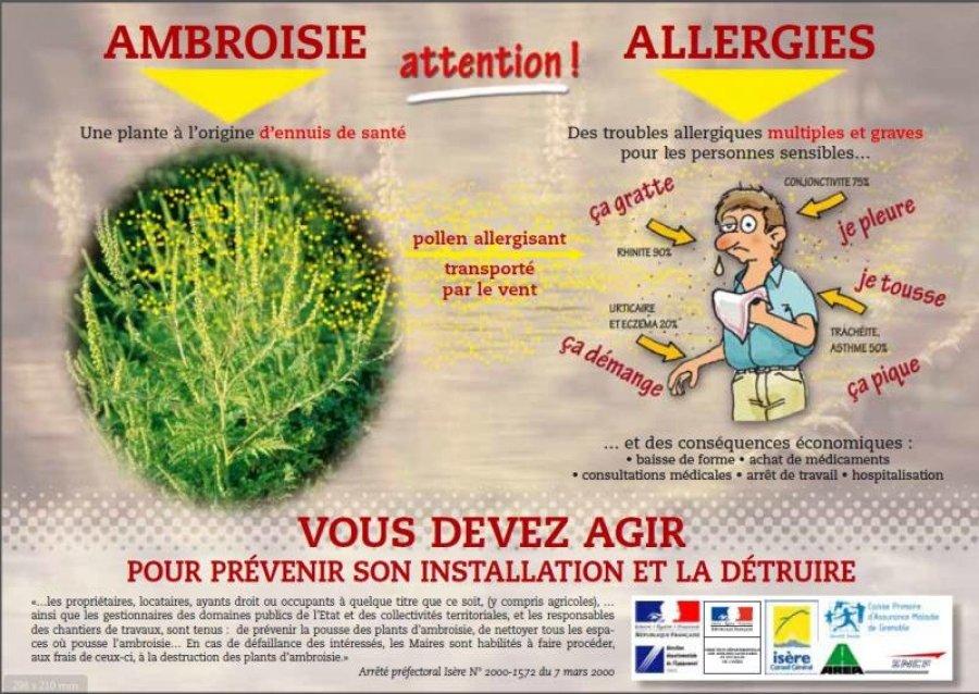 ambroisie1