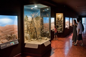 natural history museum heraklion crete