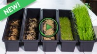 How To Grow Wheatgrass At Home - Miracle-Gro