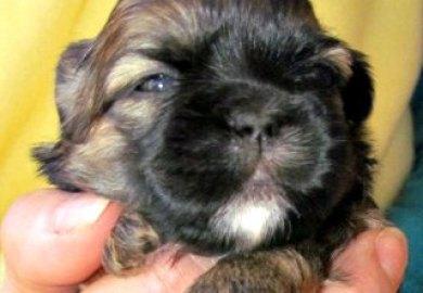3 Week Old Puppy Development