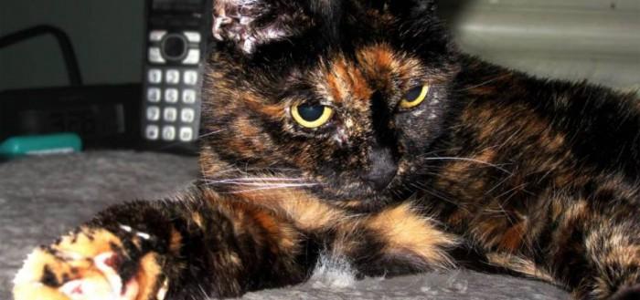 gato-longevo-mundo-guinness-700x329