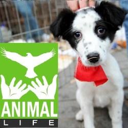 """Reactia """"Animal Life"""", la declaratiile consilierului local mediesean Ioan Ciulea"""