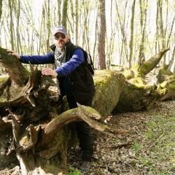 "Rezervatia ""Stejarilor multiseculari de la Breite"""
