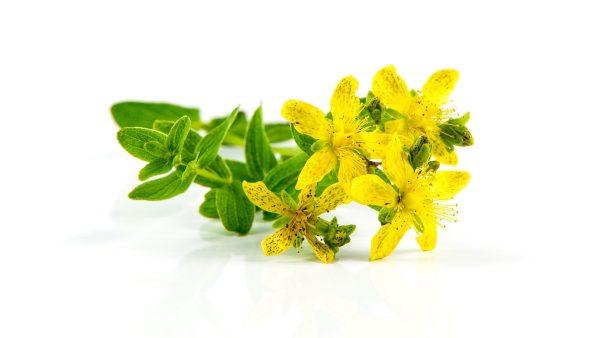 Mirdad La cura delle erbe, Gemmoterapia